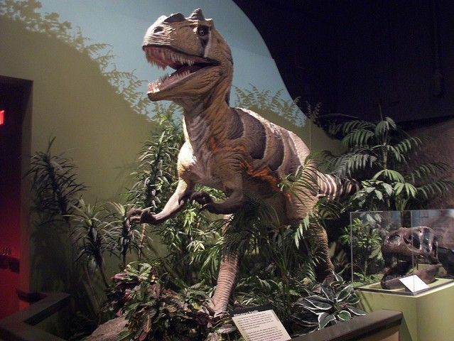 DWD173Allosaurus