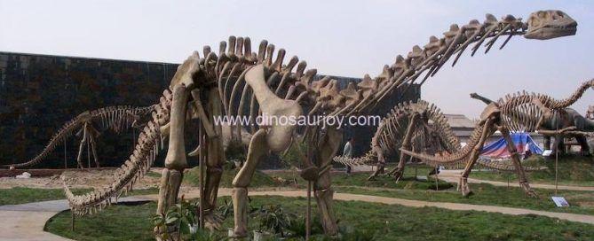 Shunosaurus Skeleton