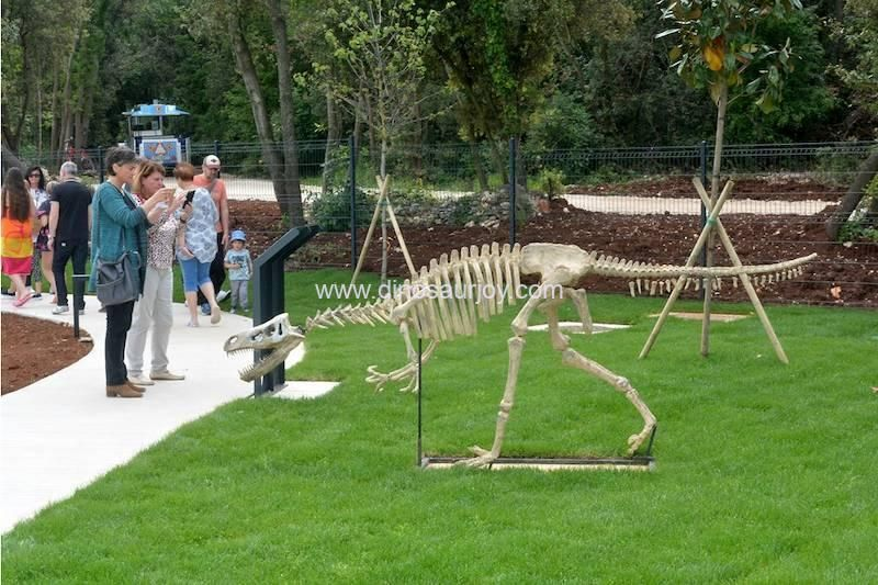 a woman taking pictures of the dinosaur skeleton