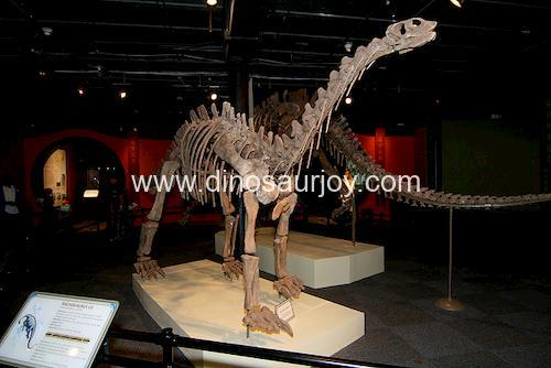 DWS002 Shunosaurus Skeleton
