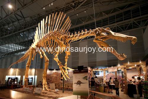 DWS010 Spinosaurus Skeleton