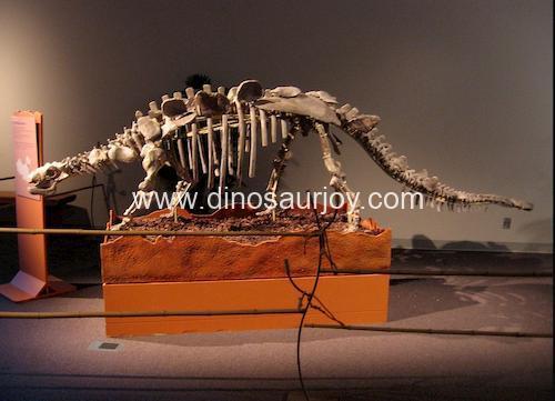 DWS011 Ankylosaurus Skeleton