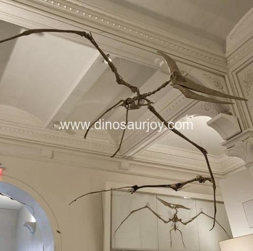 DWS012 Pterosaurs Skeleton