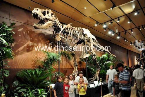 DWS016 T-rex Skeleton