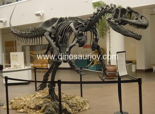 DWS023 Allosaurus Skeleton